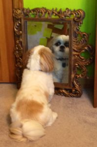 Scruff looking in mirror